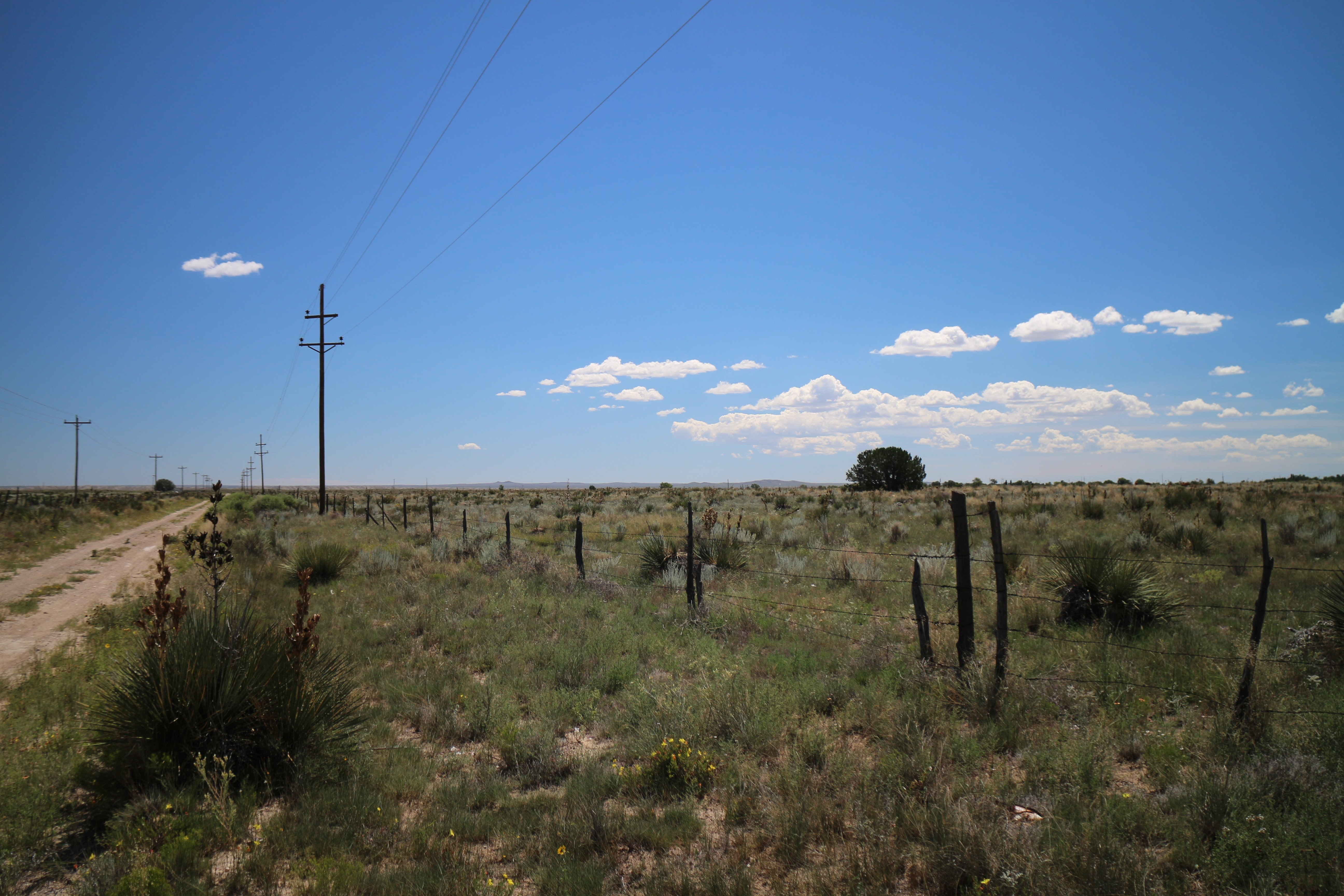 21335CAN Torrance Co, NM